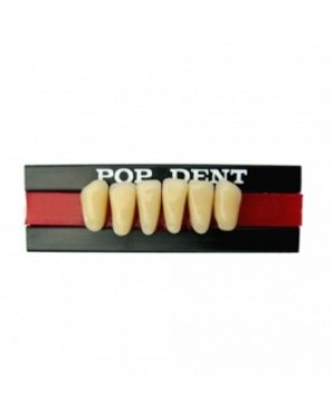 Dente 34L/77 Inferior Anterior - POP